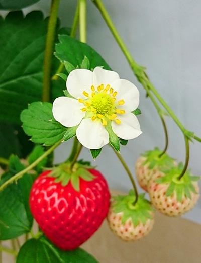 小ぶりなお花もなんとも可愛らしいですね